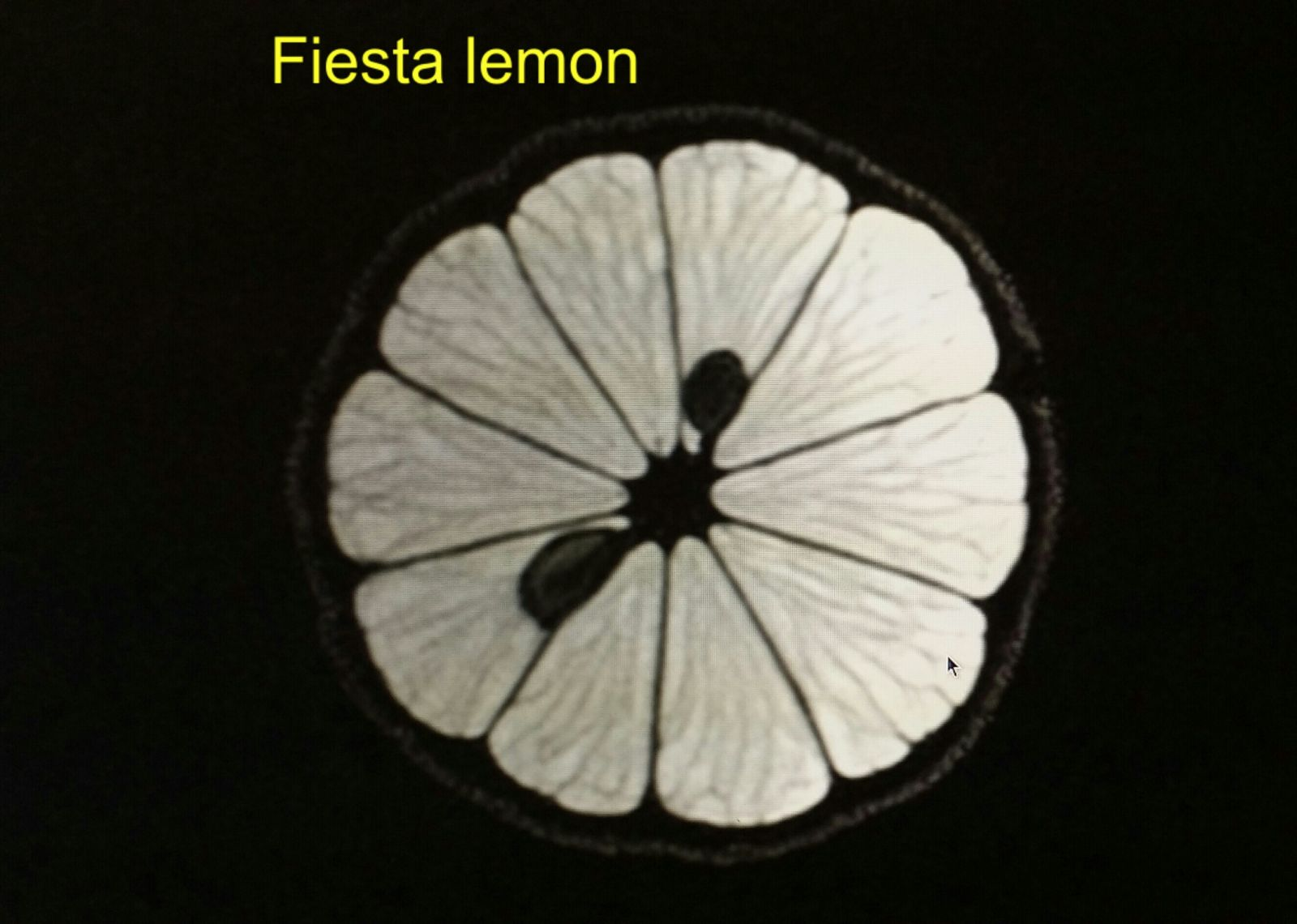 Fiesta lemon