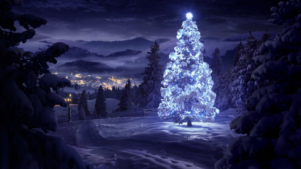 landscape-winter-christmas-tree-snow-cold.jpg
